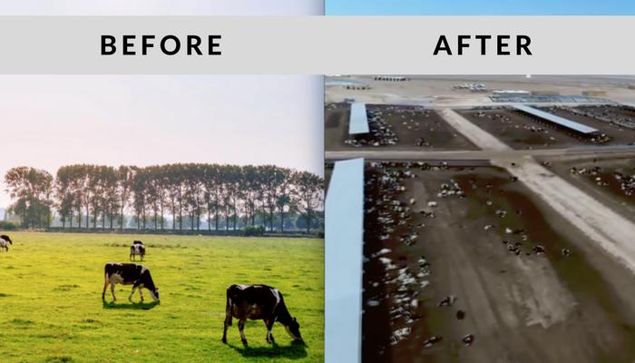 Best vegan documentary - Cowspiracy